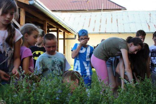 deti zbierajú bylinky na letnom tábore